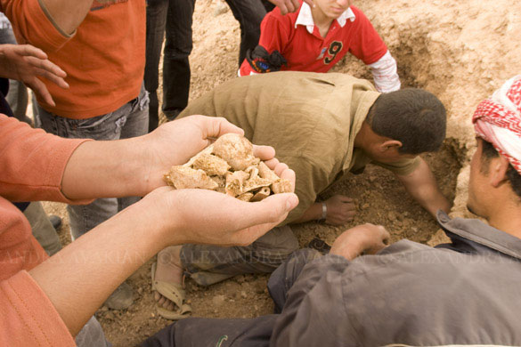 Hands holding a pile of bone fragments, recovered from a mass grave at Margada